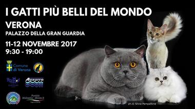 Cat Exhibition in Verona